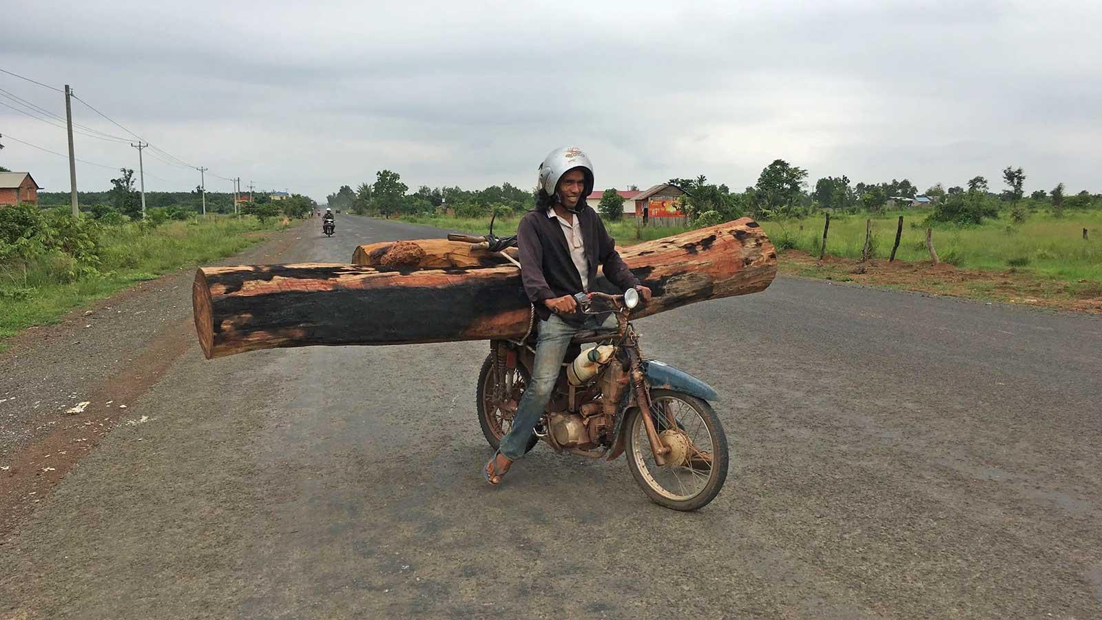 illegal logging cambodia