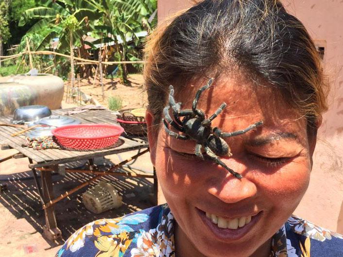 tarantula spider cambodia